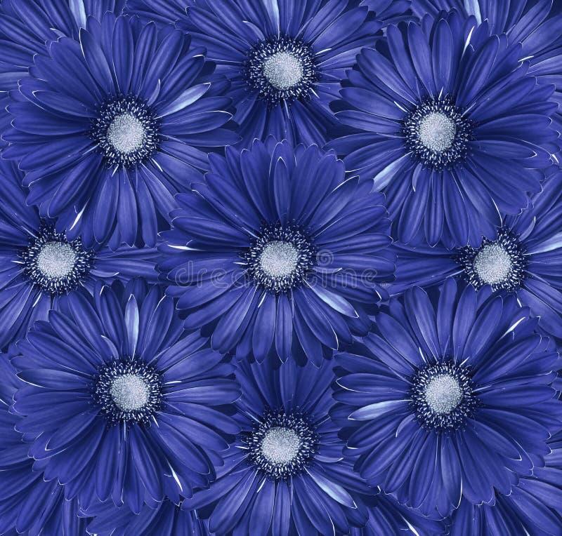 Bloemen wit-blauwe achtergrond Een boeket van bloemen van rood-gele gerberas Close-up stock afbeelding