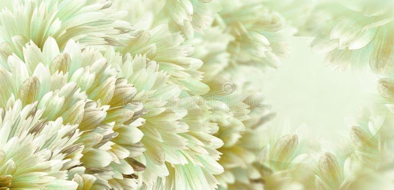 Bloemen wit-geel-groene mooie achtergrond Bloemen en bloemblaadjes van een wit-rode dahlia Close-up De samenstelling van de bloem stock afbeeldingen