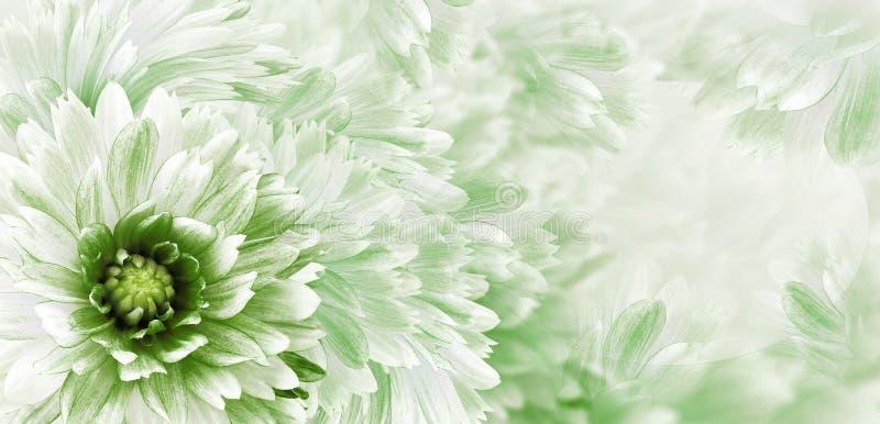Bloemen wit-groene mooie achtergrond Bloemen en bloemblaadjes van een wit-rode dahlia Close-up De samenstelling van de bloem groe royalty-vrije stock foto's