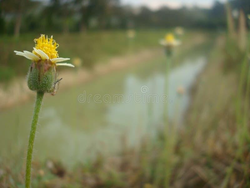 Bloemen zijway2 royalty-vrije stock fotografie