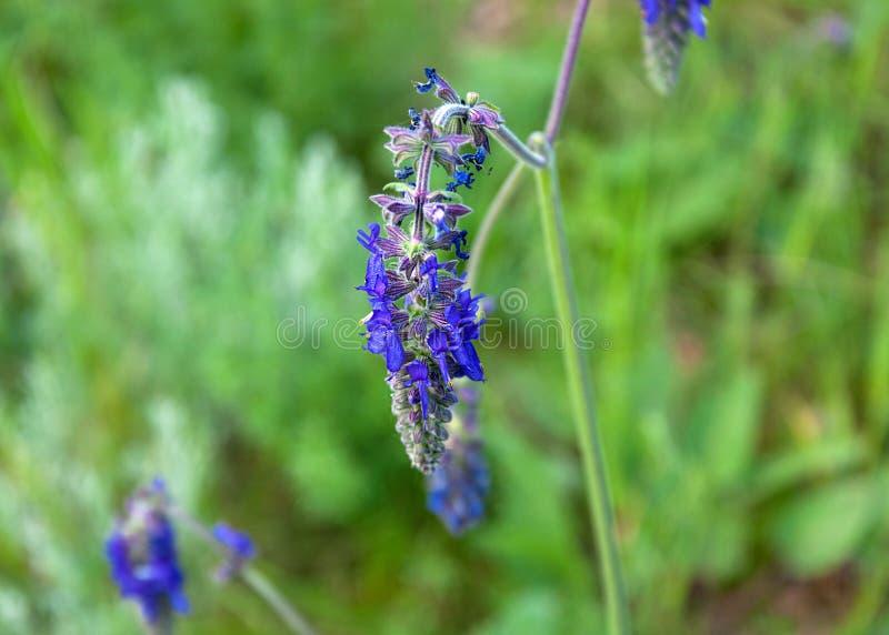 Bloemen zoals katje in het bos royalty-vrije stock afbeelding