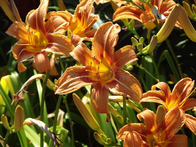 Bloemen in Zomer royalty-vrije stock foto's