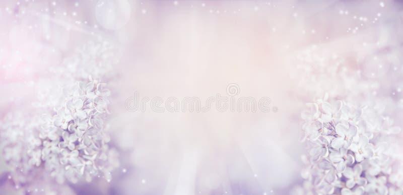 Bloemenaardachtergrond met mooie lichte pastelkleur lilac bloemen royalty-vrije stock foto's
