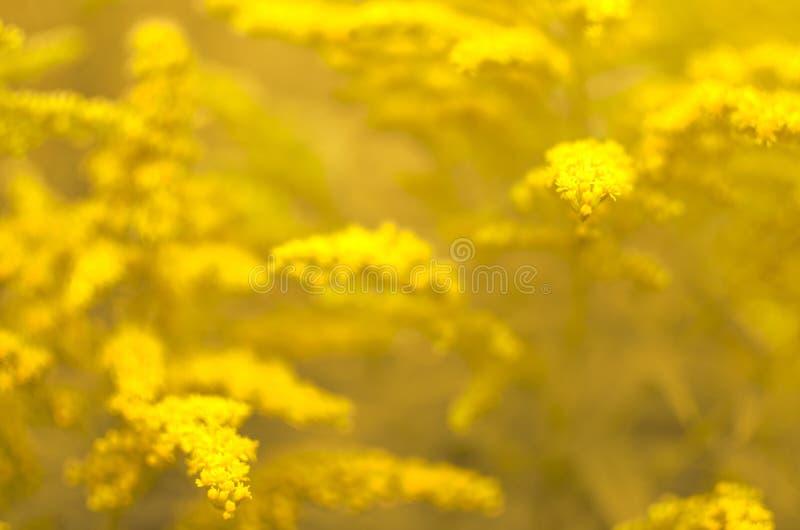 Bloemenachtergrond met een sterk onduidelijk beeld royalty-vrije stock afbeelding