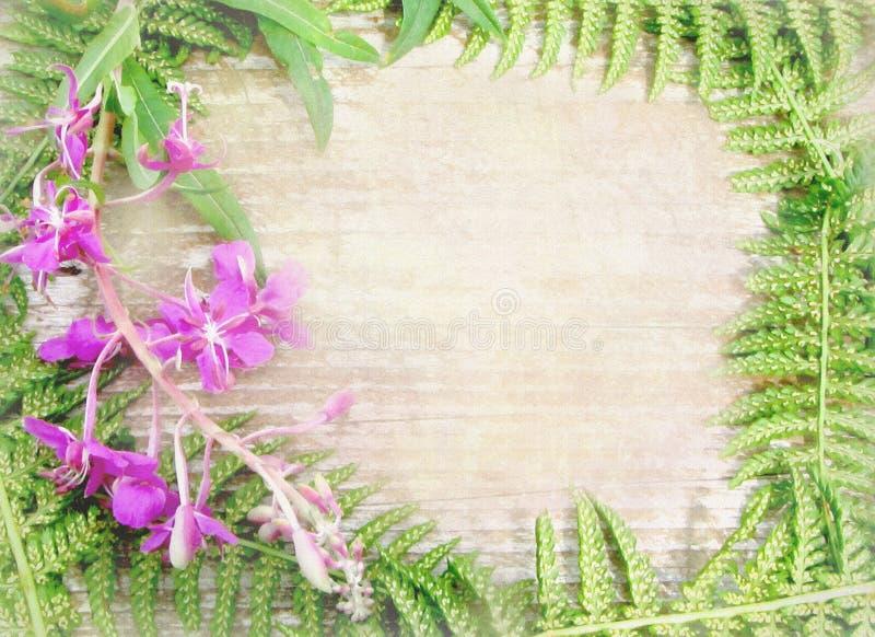 Bloemenachtergrond met wilde bloemen en kruiden stock illustratie