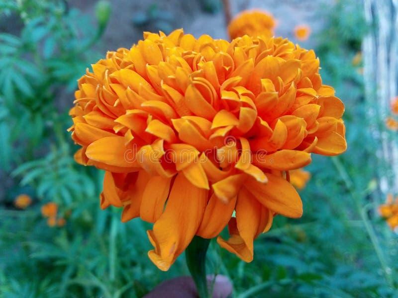 bloemenachtergrond PNG stock afbeeldingen