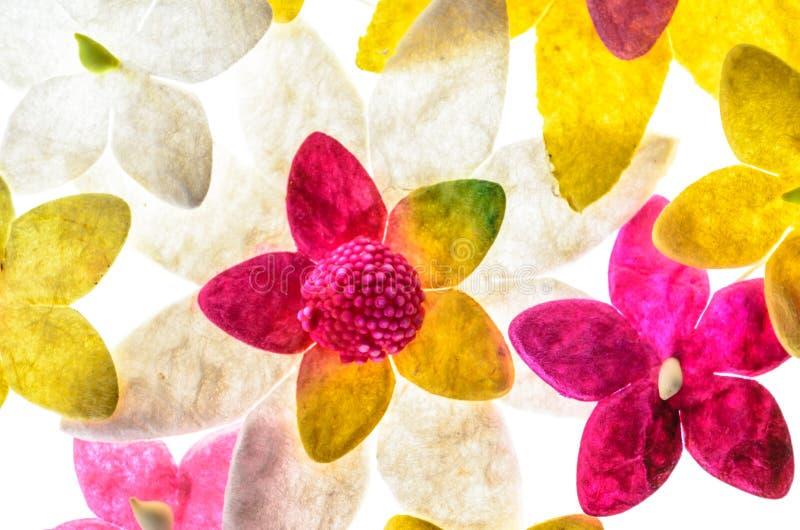 Bloemenbloemdocument patroon, bloem en kleurrijke of textielsup stock illustratie