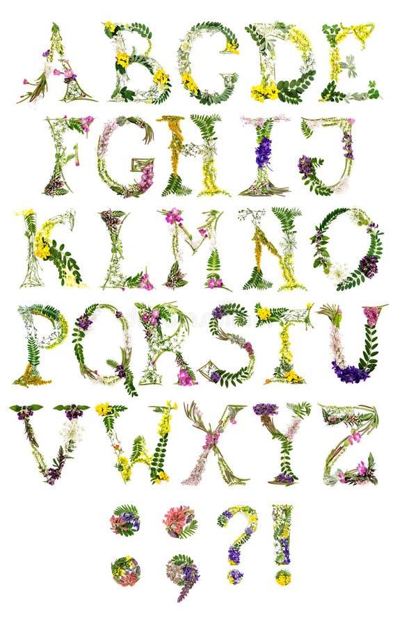 Bloemenbrieven van Latijns alfabet stock afbeeldingen