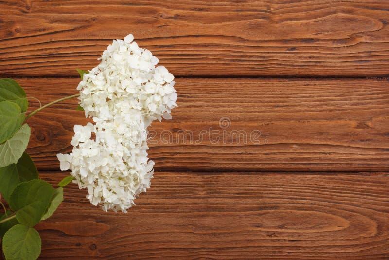 Bloemendiekader van hydrangea hortensia's wordt gemaakt stock fotografie