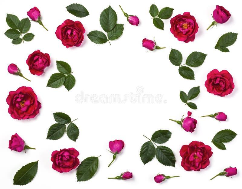 Bloemendiekader van roze roze die bloemen, knoppen en bladeren wordt gemaakt op witte achtergrond worden geïsoleerd Vlak leg stock foto's
