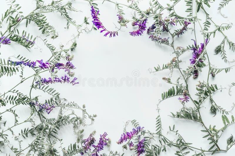 Bloemendiekader van wilde bloemen op witte achtergrond wordt gemaakt Het concept van de zomer Vlak leg, hoogste mening Bloemenont royalty-vrije stock foto