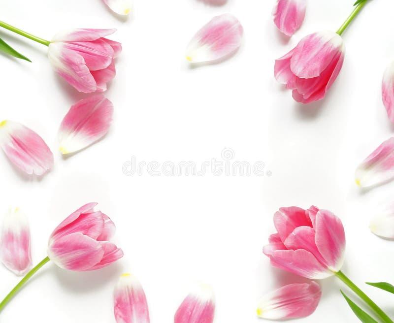 Bloemendiepatroon van roze tulpen op witte achtergrond wordt gemaakt Vlak leg, hoogste mening Patroon van bloemen De textuur van  stock afbeeldingen