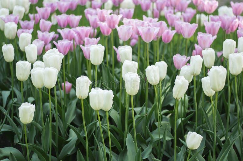 Bloemengebied stock fotografie