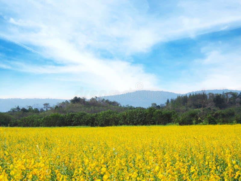 Bloemengebied voor de lente of de zomerachtergrond stock foto