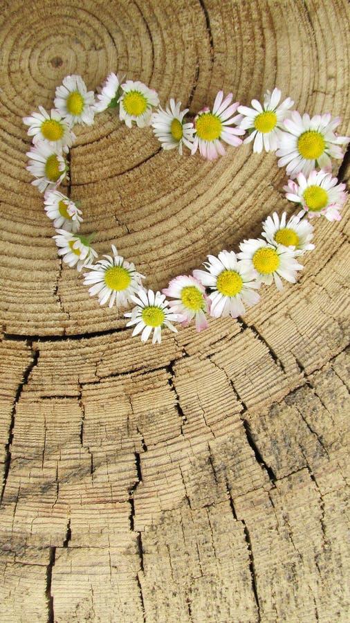 Bloemenhart op houten achtergrond stock fotografie