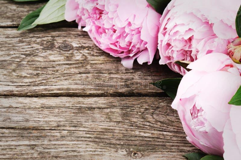 Bloemenkader met roze pioenen stock fotografie
