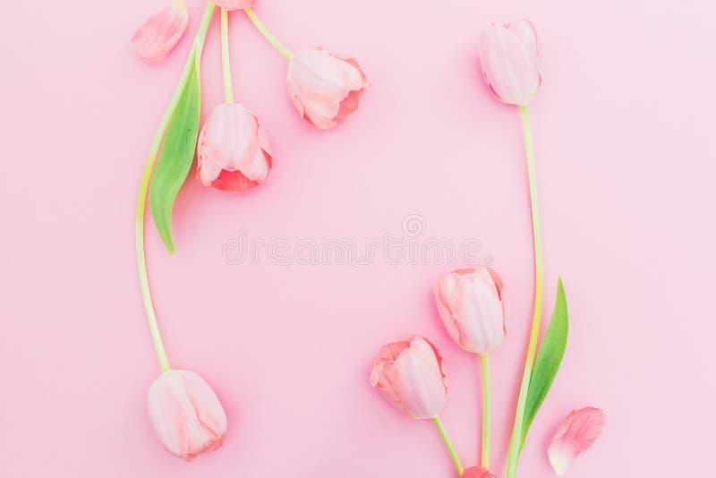 Bloemenkader met tulpenbloemen op roze achtergrond Vlak leg, hoogste mening De achtergrond van de de lentetijd met exemplaarruimt royalty-vrije stock foto's
