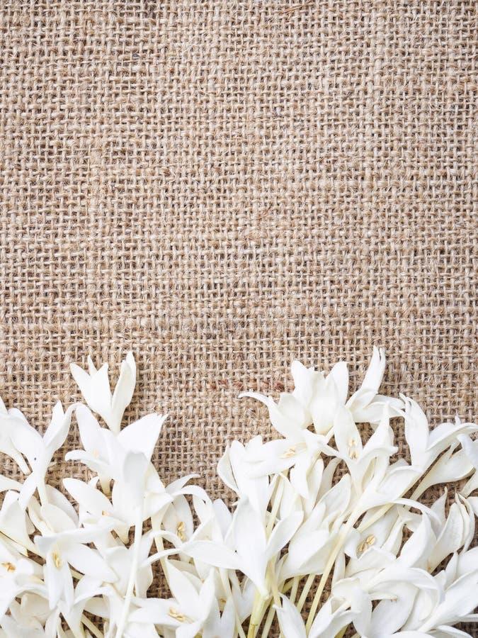 Bloemenkaderontwerp met exemplaar ruimte natuurlijk concept stock afbeeldingen