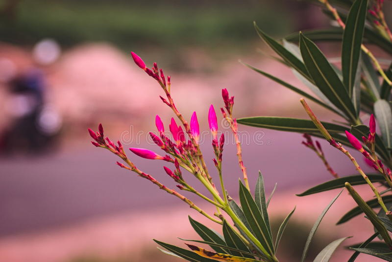 Bloemenknoppen stock afbeelding