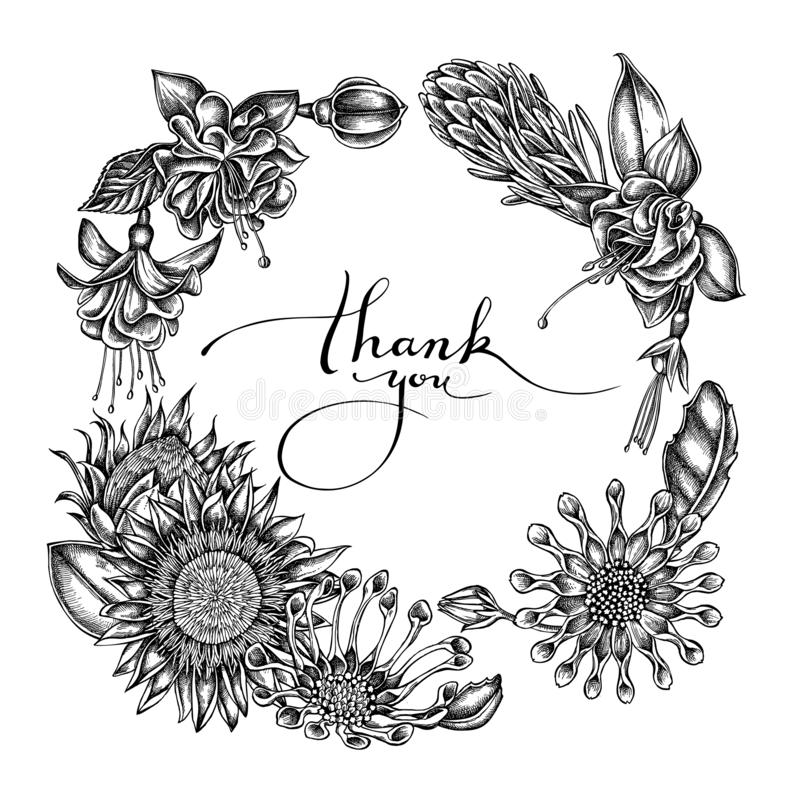 Bloemenkroon van zwart-witte Afrikaanse madeliefjes, fuchsia, koningsprotea stock illustratie