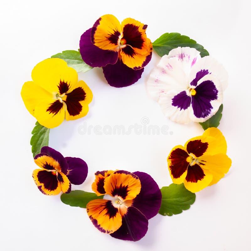 Bloemenlay-out, patroon Kroonkader van gele, lilac flo wordt gemaakt die stock afbeelding