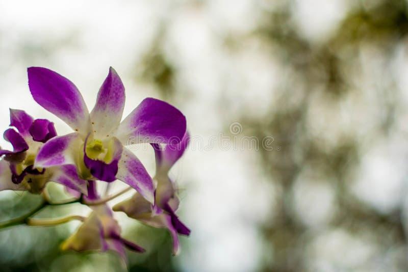 Bloemenonduidelijk beeld op de bokehachtergrond stock afbeelding