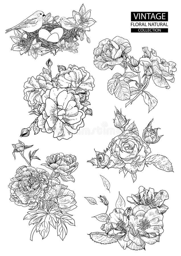 Bloemenoverzicht die vector uitstekende inzamelingen kleuren stock illustratie