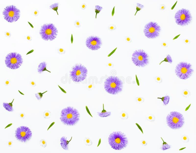 Bloemenpatroon dat van violette asters en kamille op witte achtergrond wordt gemaakt Vlak leg stock illustratie