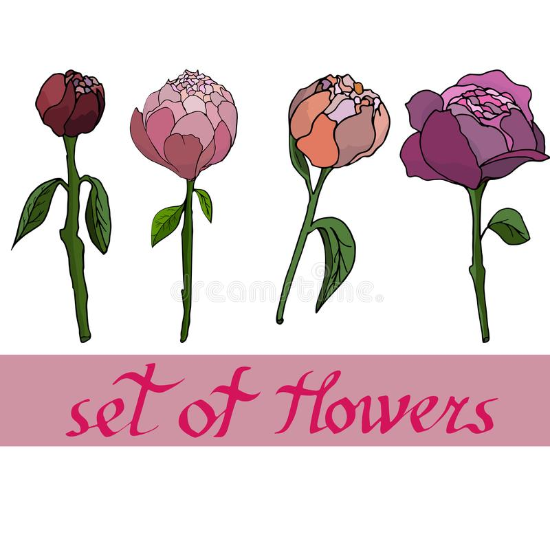 bloemenpatroon met peones met elementen van ontwerp Vector illustratie vector illustratie