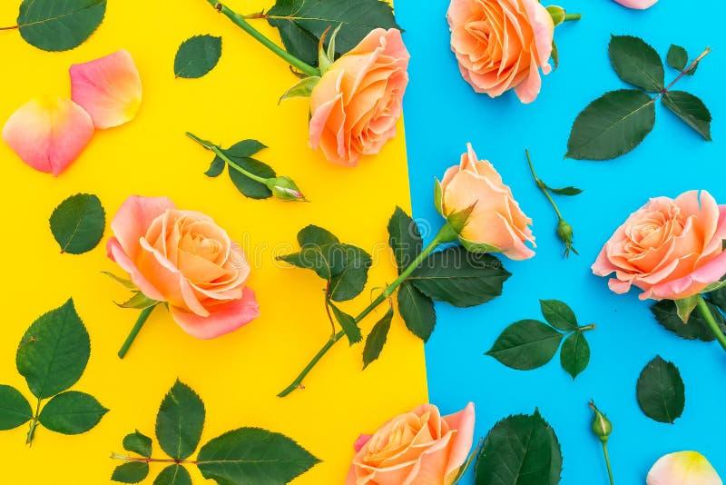 Bloemenpatroon met roze en oranje rozen, knoppen en groene bladeren op gele en blauwe achtergrond Vlak leg, hoogste mening De len stock afbeeldingen