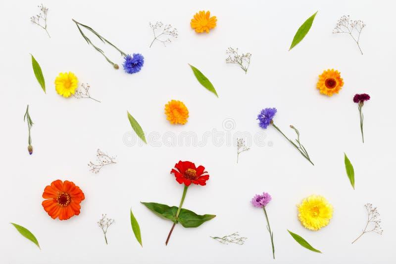 Bloemenpatroon op witte achtergrond De hoogste vlakke mening, legt stock fotografie