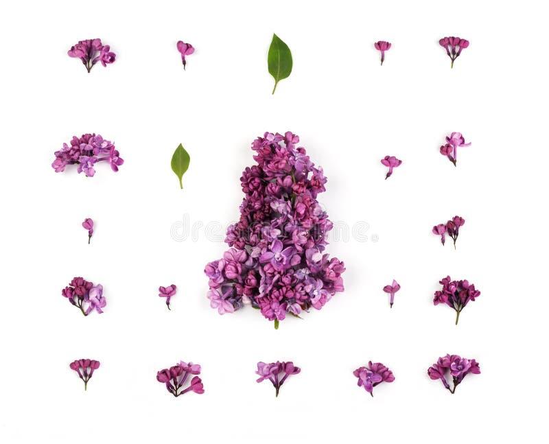 Bloemenpatroon van lilac bloemen en bladeren op witte achtergrond stock foto