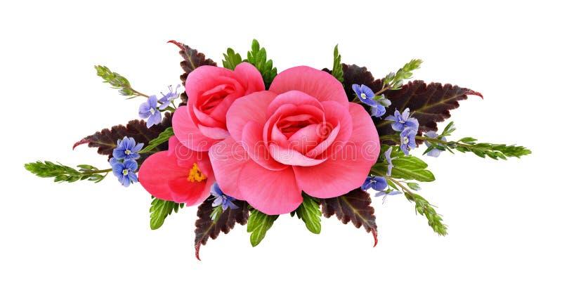 Bloemenregeling met begonia en kleine blauwe bloemen stock foto's
