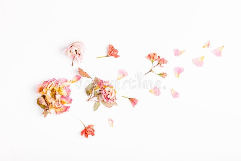 Bloemensamenstelling Kader van droge roze bloemen op witte achtergrond wordt gemaakt die Vlak leg, hoogste mening, exemplaarruimt royalty-vrije stock afbeeldingen
