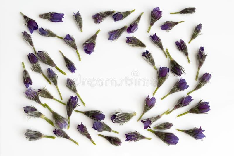 Bloemensamenstelling rond die kader van diverse kleurrijke bloemen op witte achtergrond wordt gemaakt Vlak leg, hoogste mening, e royalty-vrije stock afbeeldingen