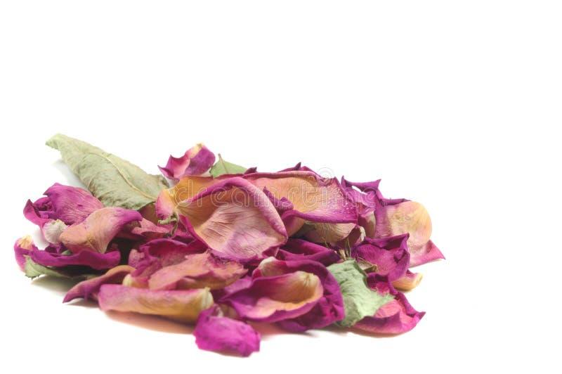 Bloemensamenstelling van droge roze bloemen De dag van de valentijnskaart `s Drie stock afbeeldingen
