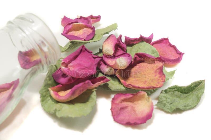 Bloemensamenstelling van droge roze bloemen De dag van de valentijnskaart `s Drie stock afbeelding