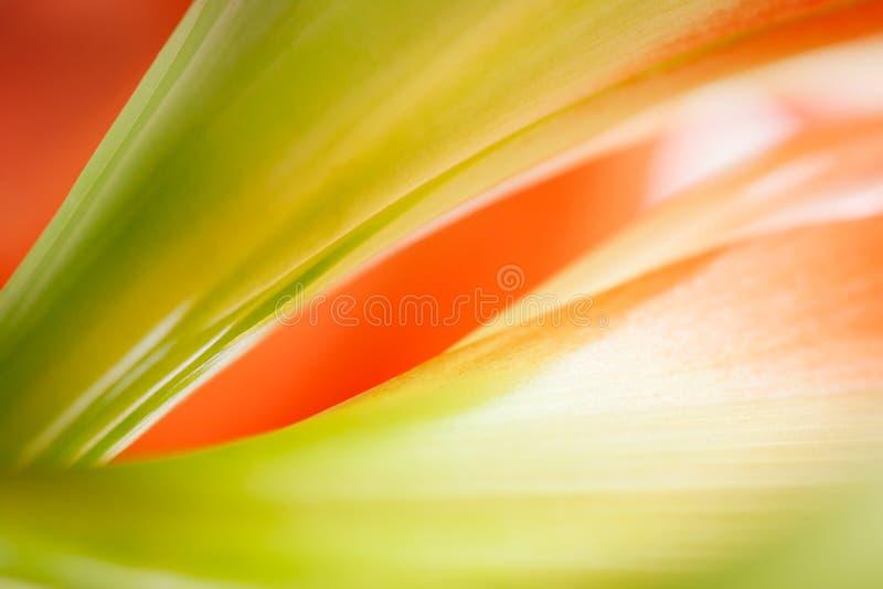 Bloemensamenvatting stock fotografie