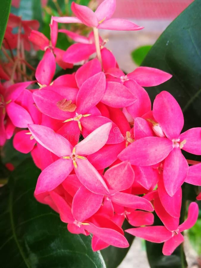 Bloemenseizoen stock foto