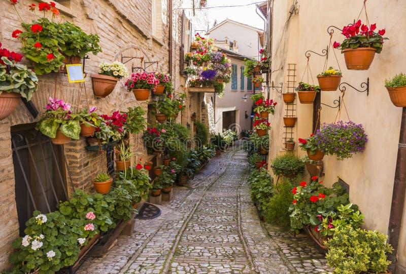 Bloemenstraten van Spello in Umbrië, Italië stock foto