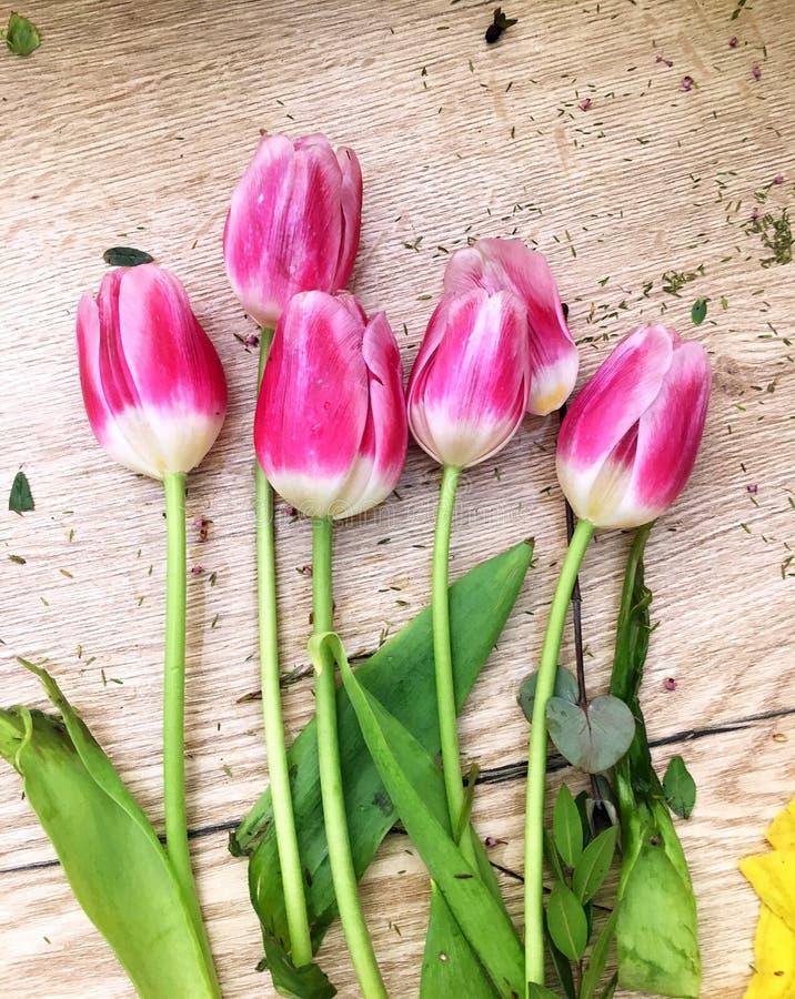 Bloementulpen die op houten lijst liggen Heldere de lentetulpen op houten achtergrond Tulpen op een houten achtergrond royalty-vrije stock fotografie