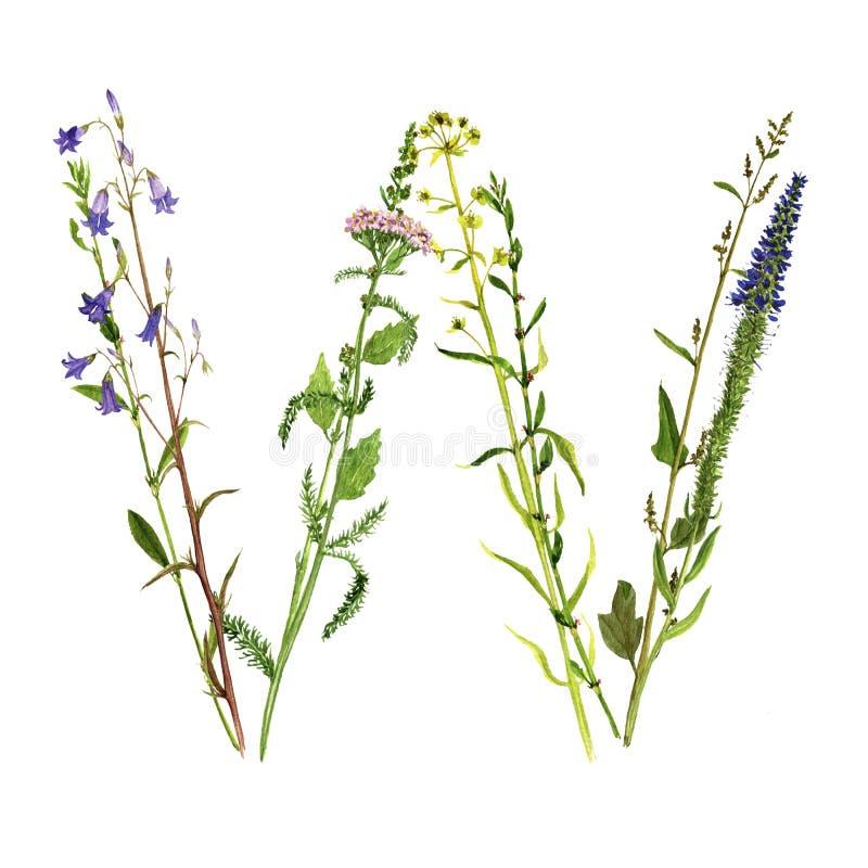 Bloemenwaterverfbrief W vector illustratie