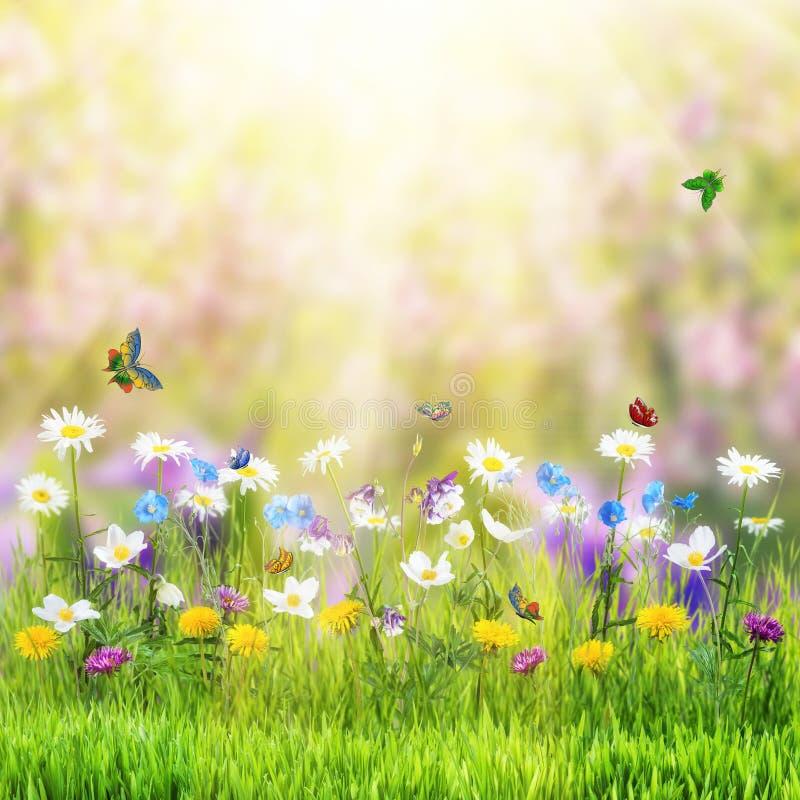 Bloemenweide en vlinder royalty-vrije illustratie