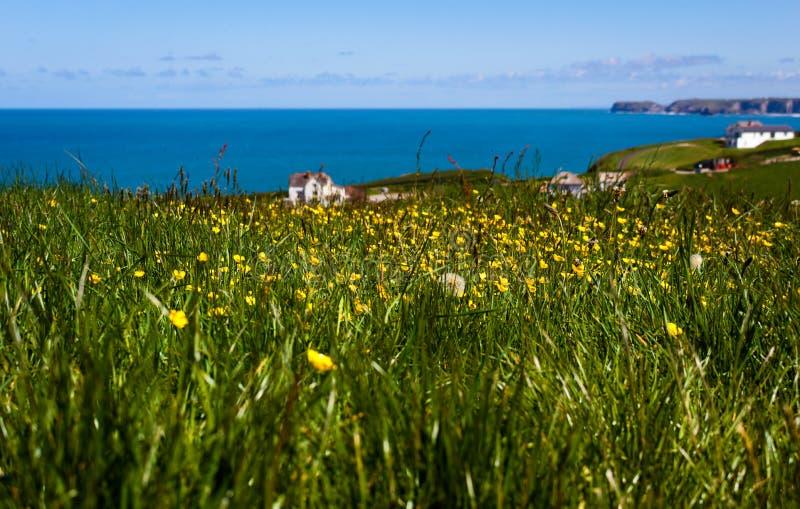 Bloemgebied bij de kust - Tintagel - Cornwall royalty-vrije stock foto
