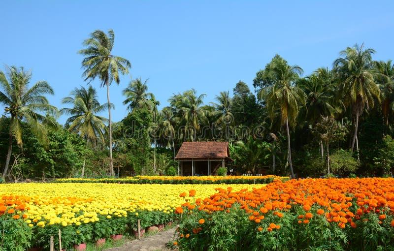 Bloemgebieden in Mekong Delta, zuidelijk Vietnam stock foto's