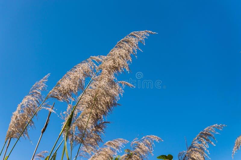 Bloemgras en blauwe hemel royalty-vrije stock afbeelding