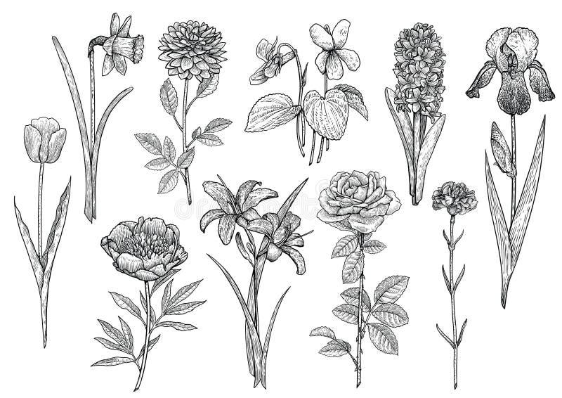 Bloeminzameling, illustratie, tekening, gravure, inkt, lijnkunst, vector stock illustratie