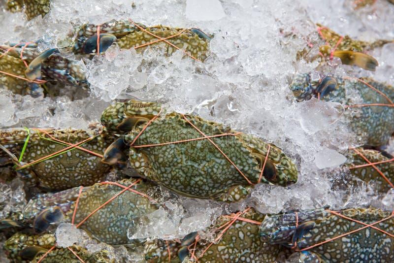 Bloemkrab, Blauwe zwemmerskrab, Blauwe korfkrab, Zandkrab, Portunus-pelagicus de stapel verse blauwe zwemmende krabben in zeevruc stock afbeeldingen