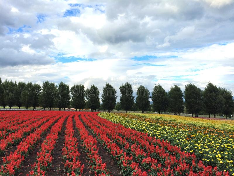 Bloemlandbouwbedrijf in Hokkaido stock foto
