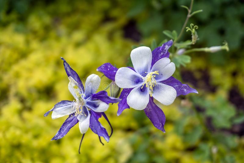 Bloemmacro in Botanische Tuinserre royalty-vrije stock afbeelding